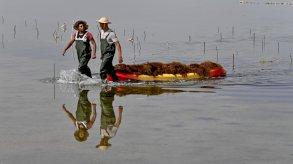 زراعة الطحالب الحمراء تجعل من تونس