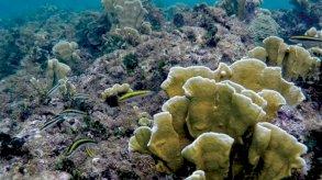 نيوم وجامعة الملك عبدالله في مشروع مشترك: أكبر حديقة مرجانية في العالم