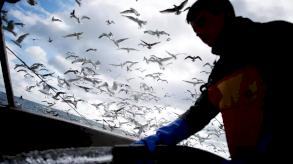 باريس تعتبر مطالب لندن الجديدة حول الصيد البحري