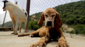 اللبنانيون يتخلون عن حيواناتهم الأليفة بعدما افترسهم الفقر