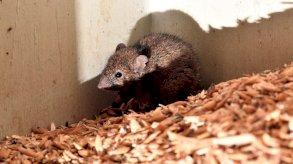 إجلاء معتقلين من سجن أسترالي غزته فئران