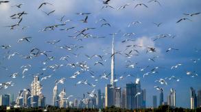 دبي تسمح بحضور فعاليات غنائية ورياضية للملقحين ضد كوفيد-19