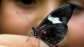 أكبر عدد من الفراشات في العالم موجود في كولومبيا
