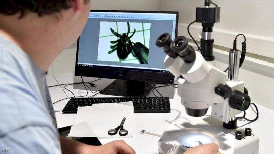 عامل مختبر يتفحص حشرة القراد بجهاز الميكروسكوب. (أرشيفية)